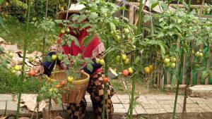 Perhatikan Hal-Hal Berikut Sebelum Berkebun